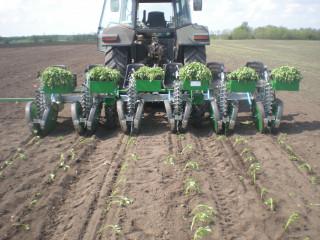 FEDELE PLANT fogóujjas palántázó